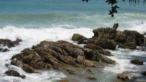 Камни, скалы, побережье, море, волны, порезы, ветви