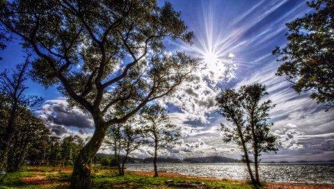 Свет, солнце, деревья, берег, озеро, спокойствие