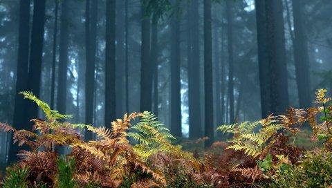 Папоротник, на переднем плане, деревья, лес, осень