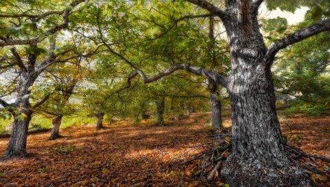 Дерево, деревья, ветки, хвороста