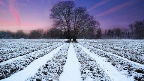 Зима, поле, звания, снег, дерево, вечер, сирень