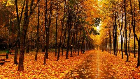 Осень, парк, проспект, деревья, тропа, плитка, мокрый