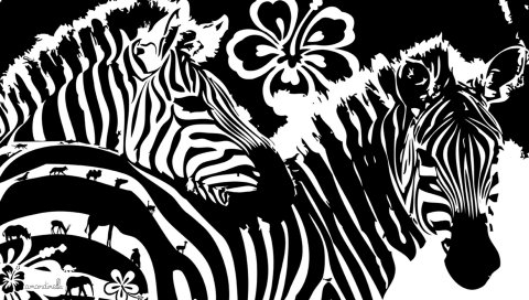 Зебра, цветы, линии, графика