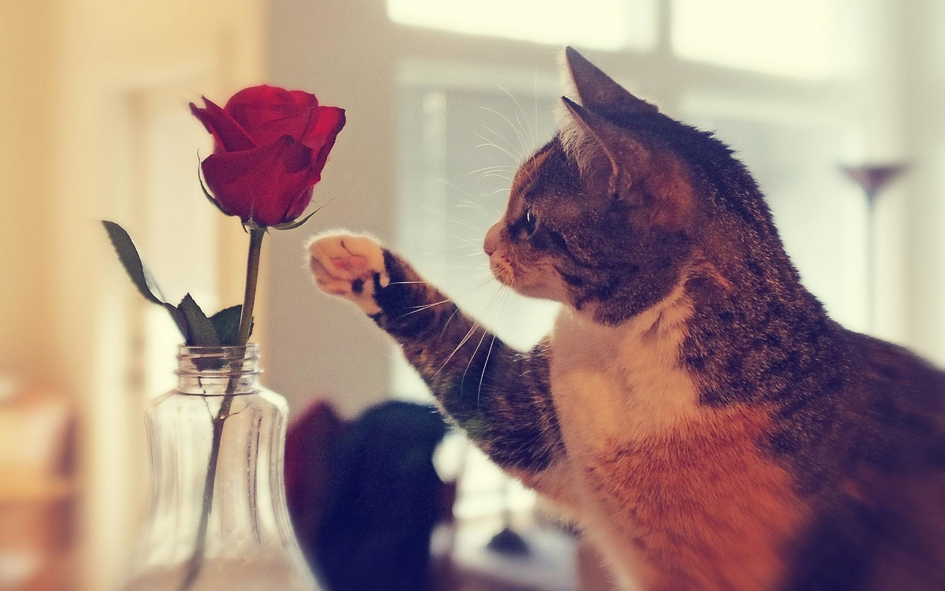 Прикольная картинка с розами