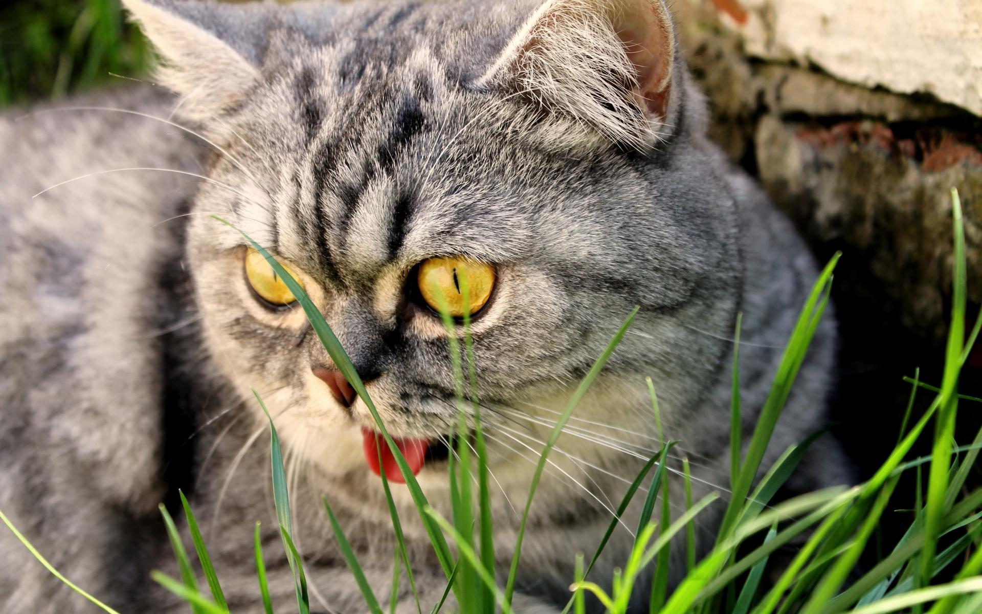 картинки на рабочий стол животные кошки смешные всем, кто