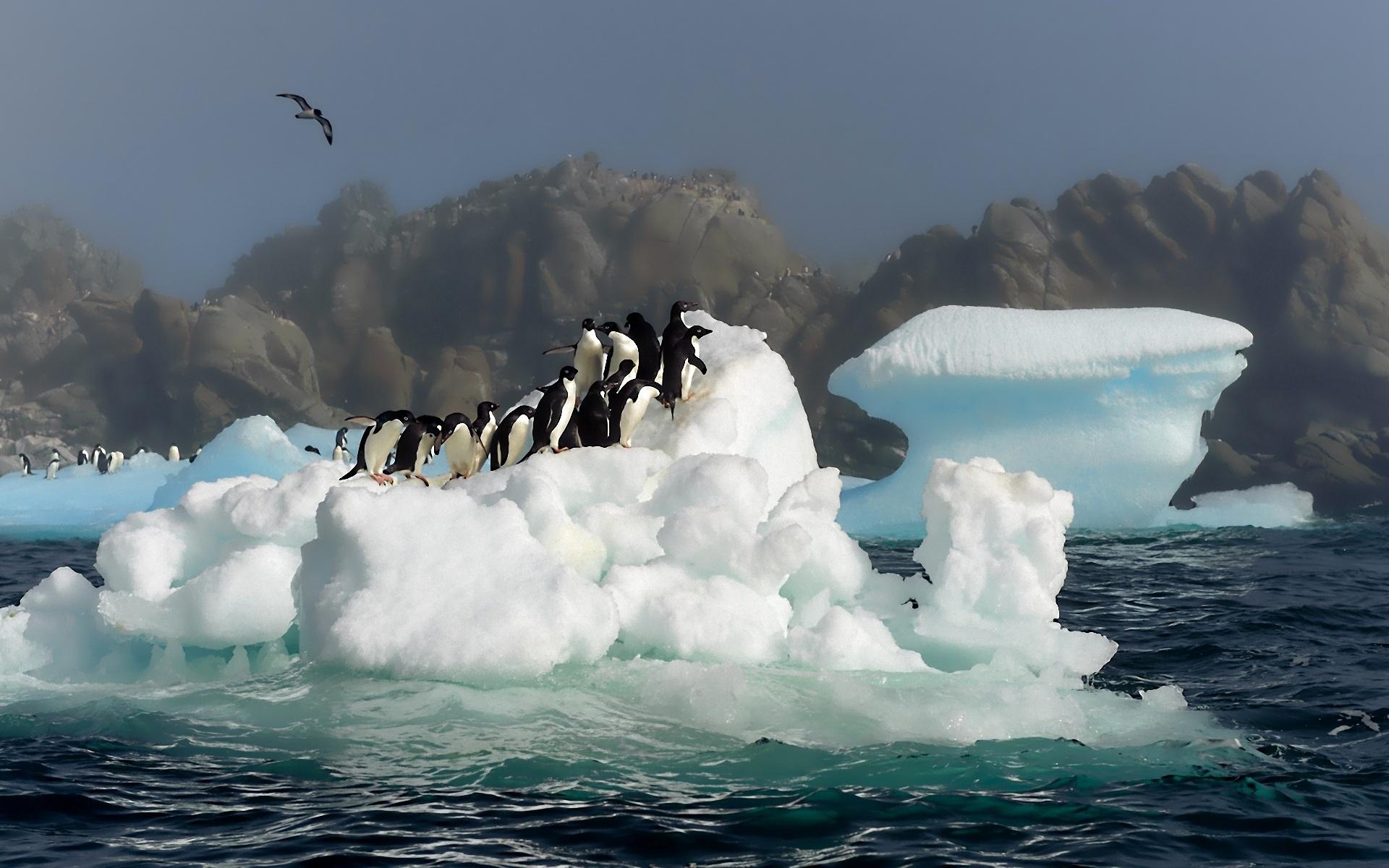 профильных обои на рабочий стол пингвины на льдине бибер проехался