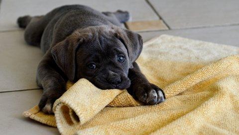 Собака, щенок, вниз, ткань, игра