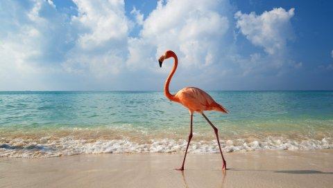 Фламинго, птица, пляж, море