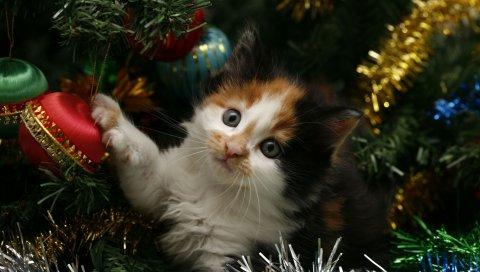 Котенок, лицо, пятнистый, дерево, рождество, рождественские украшения