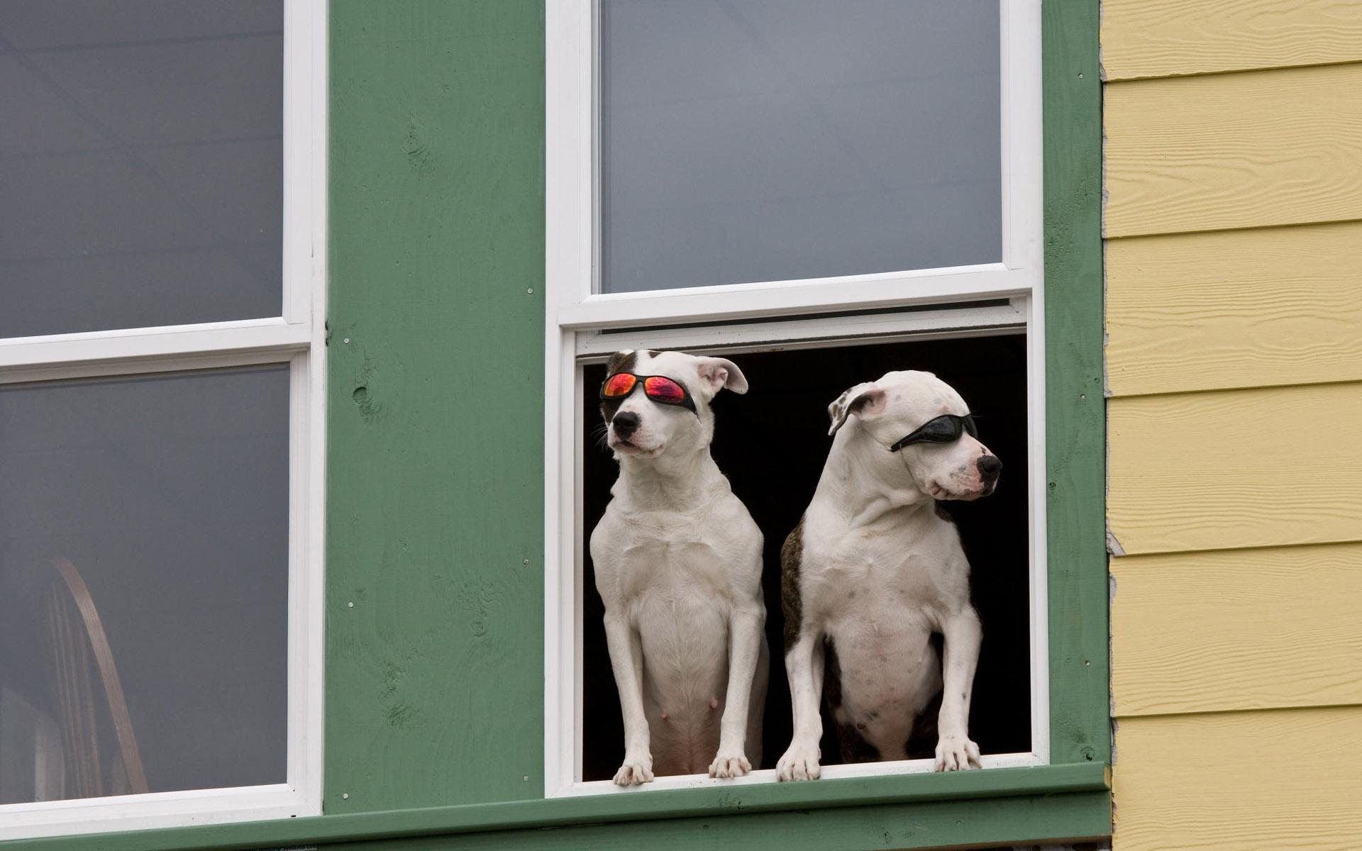 Смешные картинки на окнах