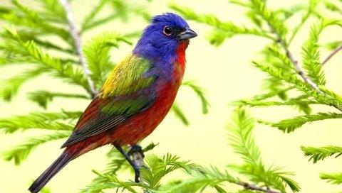 Птица, ветка, сидеть, цвет