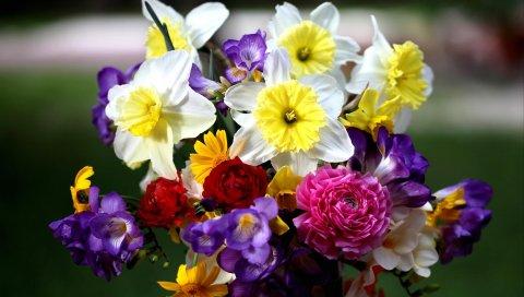 Нарциссы, розы, фрезия, букет, цветы