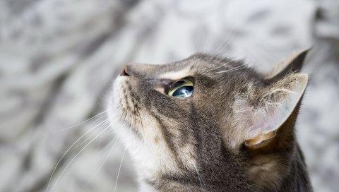Кошка, морда, глаза, профиль, монитор