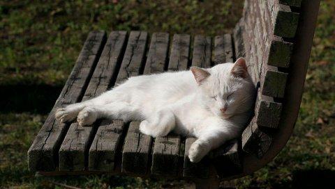 Кошка, скамейка, ложь, свет