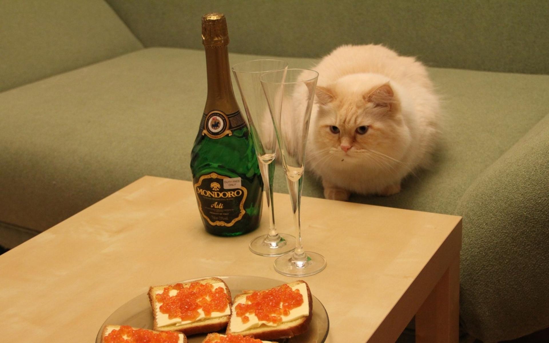 смешные фото про шампанское можно