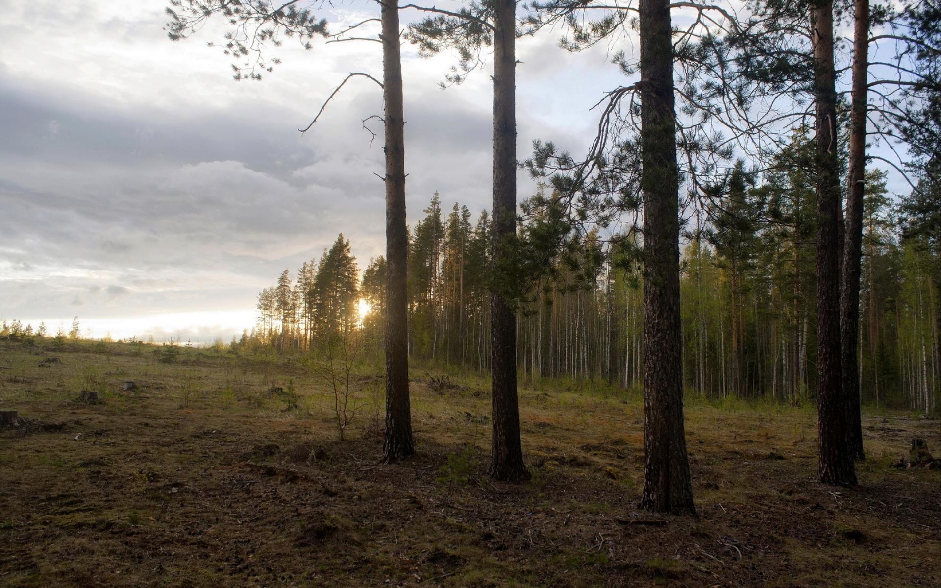 Картинки Дерево, край, деревья, спад, пейзаж, сосны фото и обои на рабочий стол