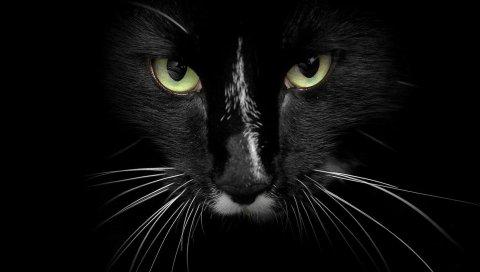 Кошка, лицо, глаза, темнота, агрессия
