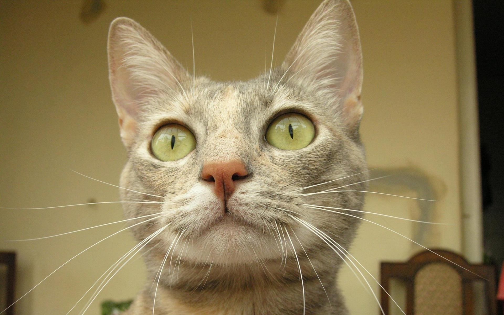 оголяют котенок удивлен фото время барбус плавает