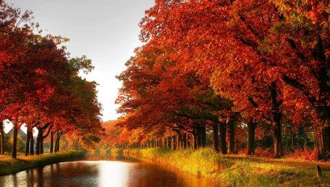 Дерево, апельсин, деревья, канал, осень