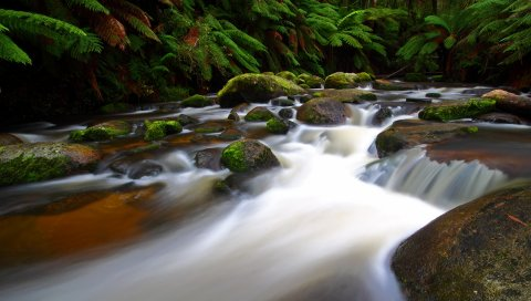 река, ручей, папоротник, мох