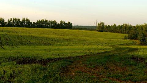 поле, зеленый, облачно, сельское хозяйство