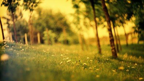 поляны, деревья, деградация