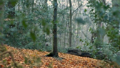 дерево, ствол, осень, листья, пустота, тупость