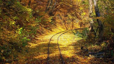 железная дорога, лес, листопад, поворот, рельсы