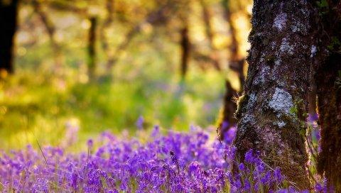 Дерево, туловище, цветы, лето