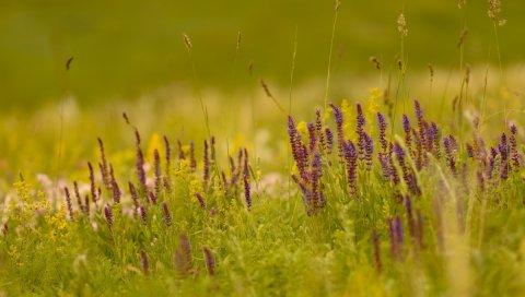 Цветы, сирень, лезвия, поле, деградация