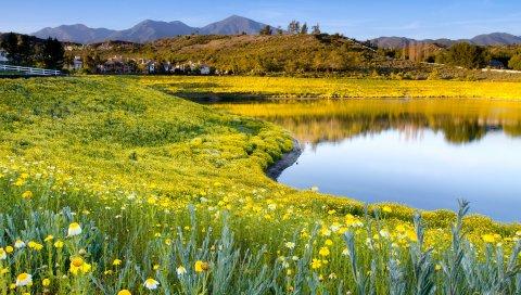 Побережье, озеро, желтый, горы