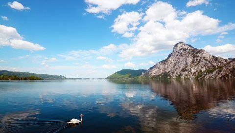 Лебедь, горы, озеро, отражение
