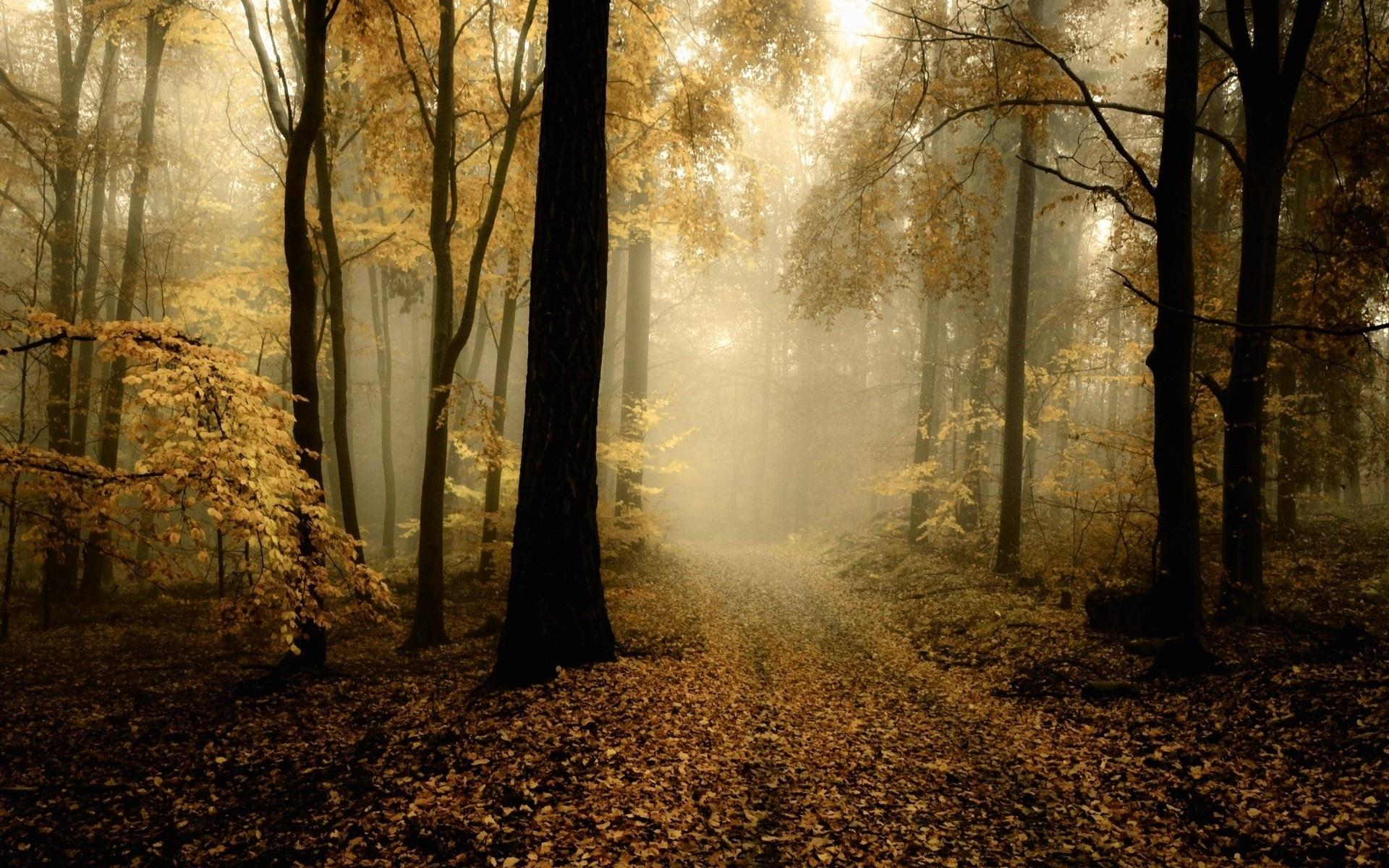 Картинки Дорога, дымка, дерево, деревья, листья фото и обои на рабочий стол
