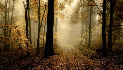Дорога, дымка, дерево, деревья, листья