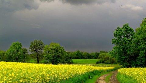 Облачно, дорога, цветы, лето