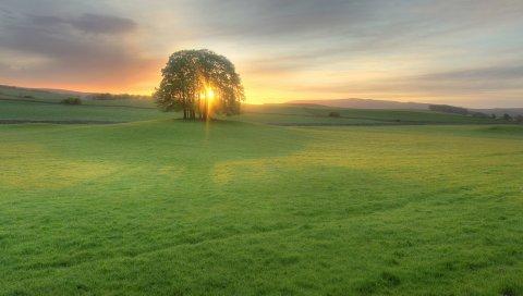 Деревья, луг, свет, солнце, закат, вечер, зеленый, открытые пространства