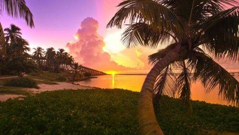 Пальма, побережье, закат, мост, вечер