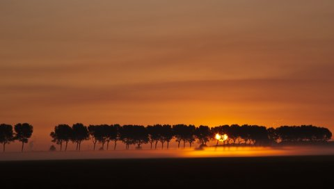 Закат, вечер, оранжевый, деревья, ряд, солнце, очертания, спокойствие