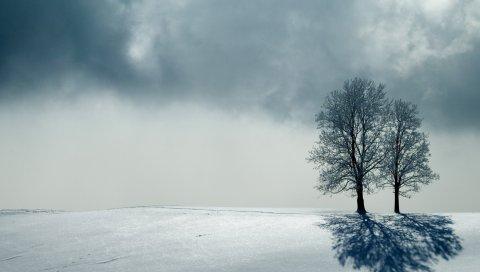 Деревья, горизонт, серый, тень