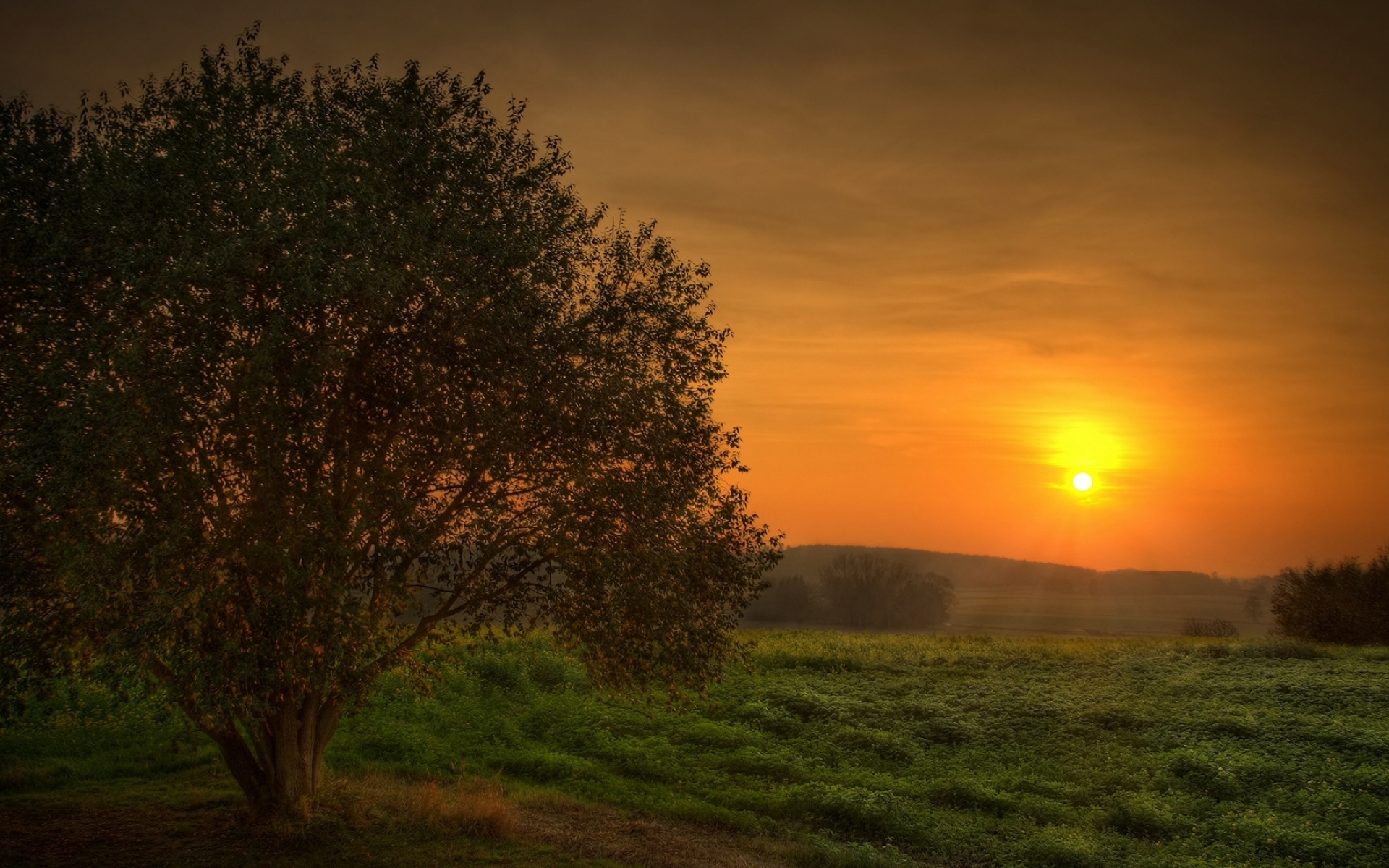 закат, деревья, зелень без смс