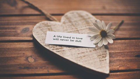 Чувства, любовь, романтика, жизнь, признание, речь, ромашка, сердце