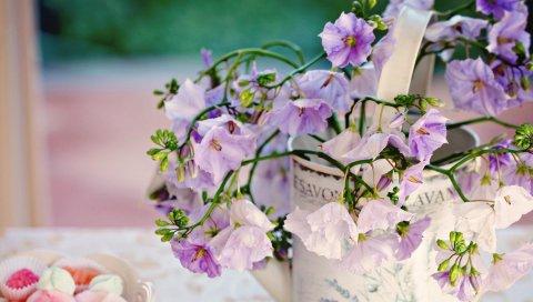 Цветы, букет, пилюли, сладости, поднос