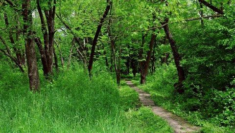 Дерево, дорожка, деревья, лето, круг, подпись