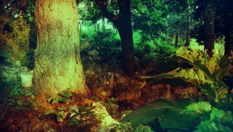 Дерево, туловище, растительность, круг, цвета, краски, оттенки, модуляции