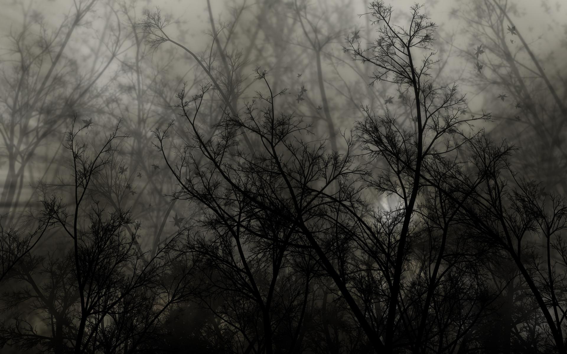 Картинки Деревья, ветки, темные, ночь фото и обои на рабочий стол