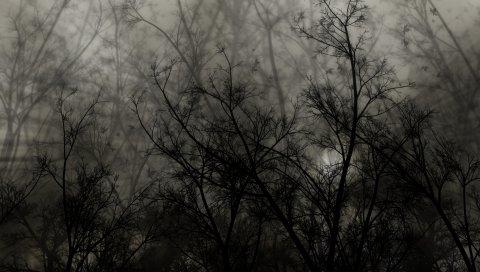 Деревья, ветки, темные, ночь