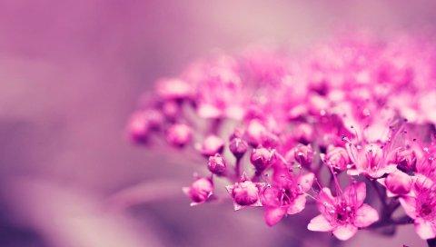 Цветок, растение, фон, размытие