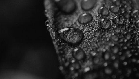 Лист, поверхность, капли