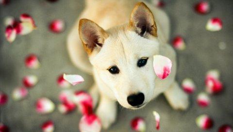 Собака, лепестки, глаза, лицо