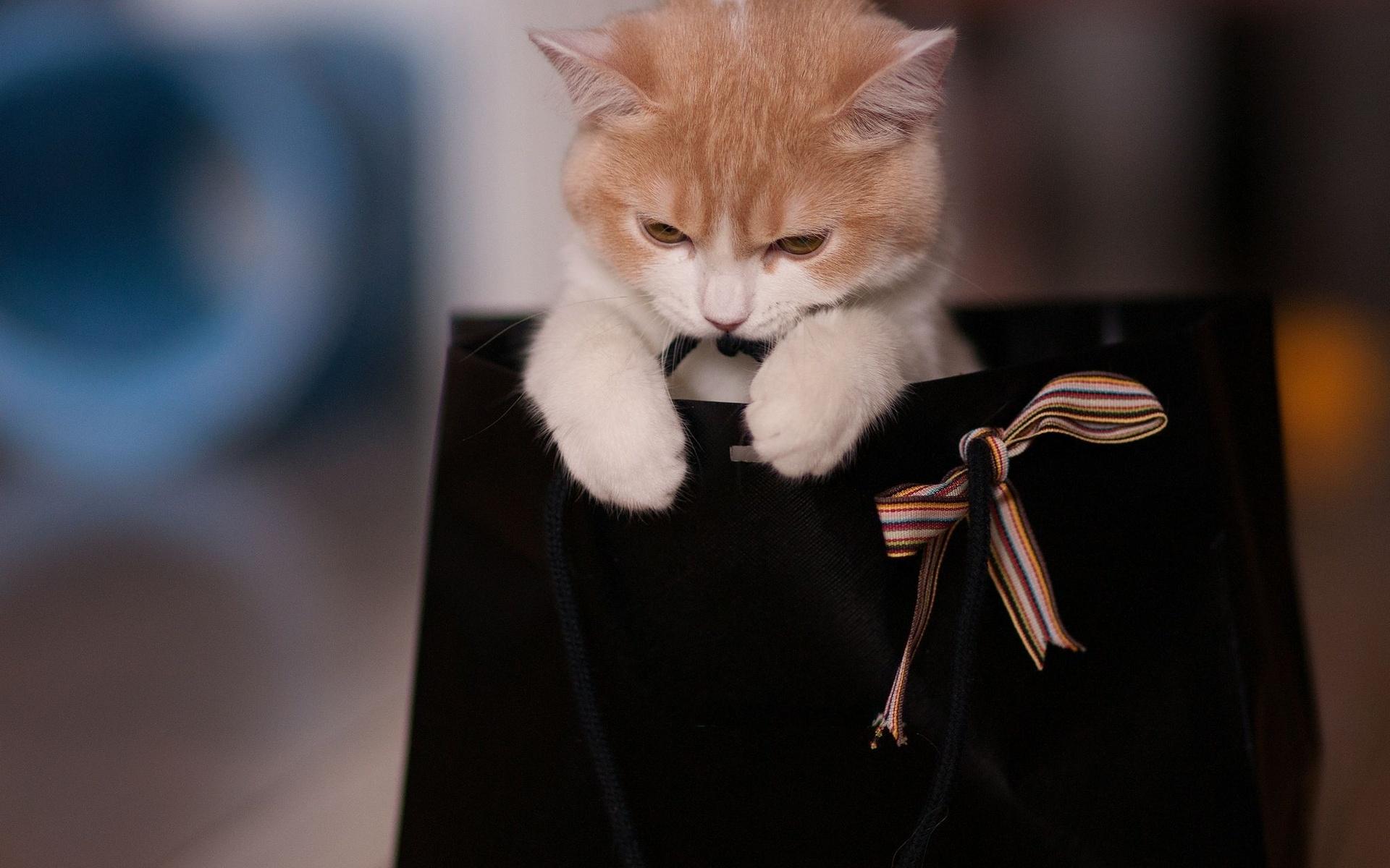собака пакет сумка  № 1143277 бесплатно